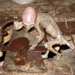 Alien creature? real or hoax?