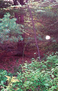 Supposed Orb from the Hinsdale property