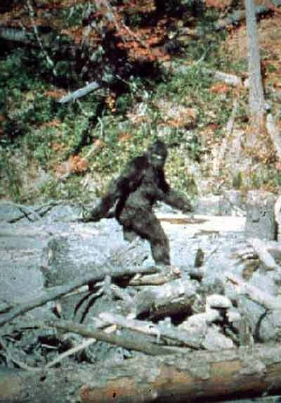 Bigfoot Researcher Believes US Forest Service Covers-up Bigfoot
