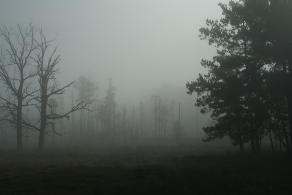 haunted_forest__morguefile