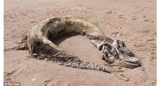 Sea Monster Carcass or Just a Misidentification?