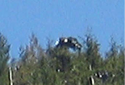 Does This Photo Prove An Abduction On Green Mountain, WA?