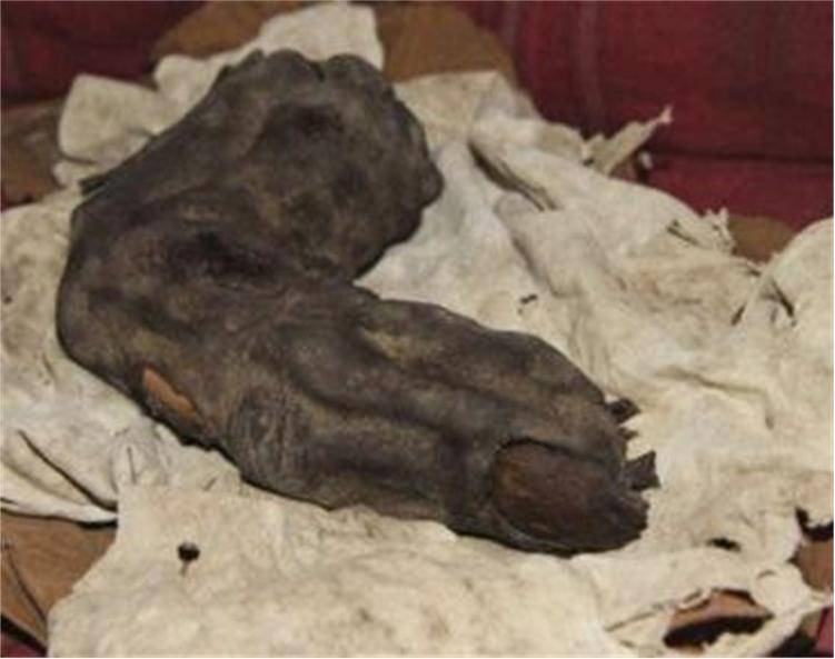 Video: Giant Mummified Finger Found In Egypt