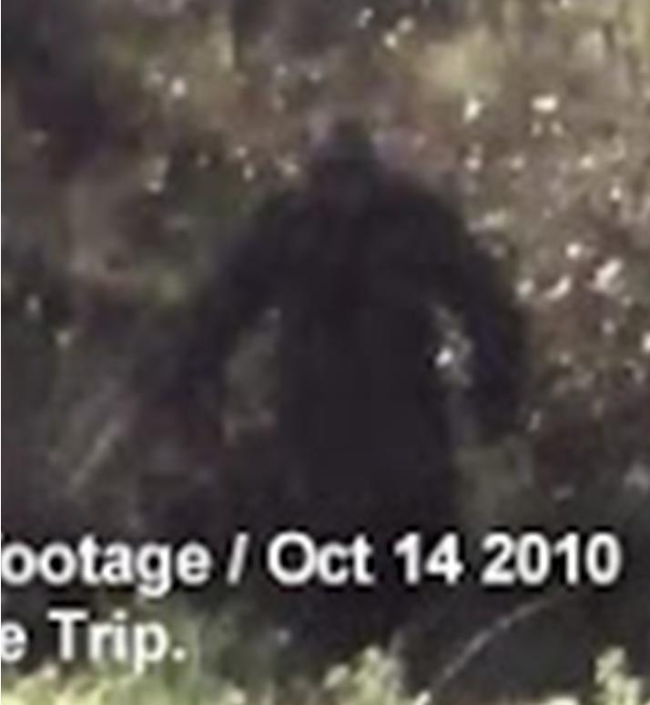 New Footage: Bigfoot Seen In Algonquin Park?