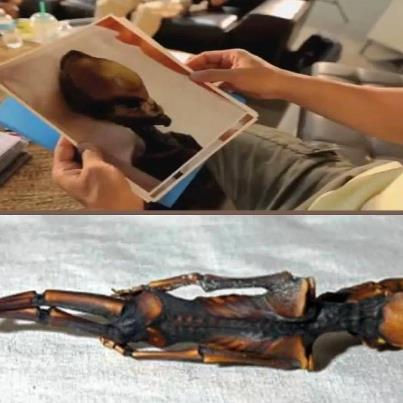 Another 'Tiny Alien' Body Found