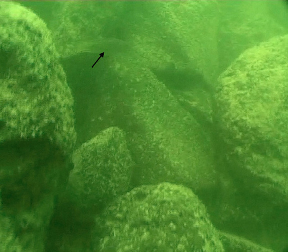 Megalithic Structure Found Beneath Sea Of Galilee