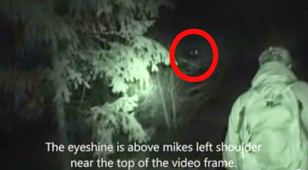 Bigfoot's Eyes Caught On Camera?  No.