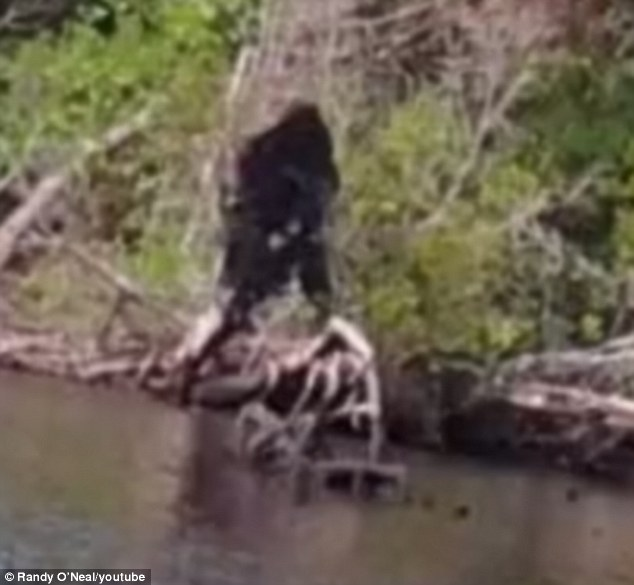 Virginia Bigfoot