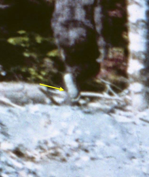 Patterson-Gimlin Bigfoot: New Evidence Found On Frame 61