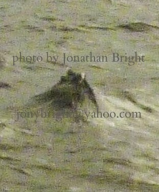 Infra-red Images of Nessie: UPDATE